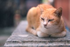 Angry face brown cat lay down on bench. Angry face brown stray cat lay down on bench Royalty Free Stock Images