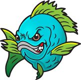 Angry Fish. This is an angry fish who does like hooks Stock Photo