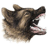Angry German Shepherd hand drawn Royalty Free Stock Photos