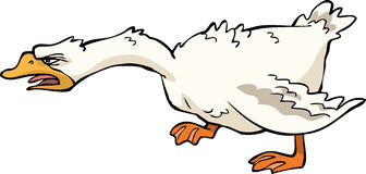 Angry goose. On white background vector Royalty Free Stock Photography
