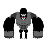 Angry gorilla on its hind legs. Aggressive Monkey on white backg Stock Images