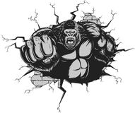Angry gorilla. Vector illustration, ferocious gorilla hit the wall with his fist Royalty Free Stock Photography