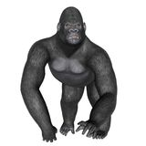 Angry gorilla walking - 3D render Stock Photos