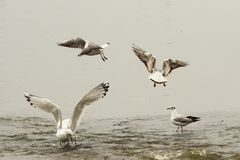 Gulls on fishing spot Royalty Free Stock Photo