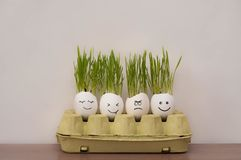 Angry and happy emotions faces drawing in the eggs shell. Fresh growing green  wheat sprouts. Home garden funny diy ideas royalty free stock photography