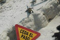 Angry iguana Royalty Free Stock Image