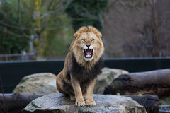 The angry king. Grin of young male king sitting on a rock stock images