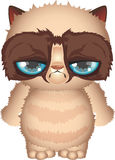 Angry kitten Royalty Free Stock Images
