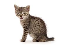 Angry kitten Stock Photos