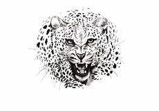 Angry leopard muzzle, black and white sketch.  Royalty Free Stock Images