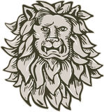 Angry Lion Big Cat Head Etching Royalty Free Stock Images