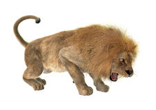 Angry Lion. 3D digital render of an angry roaring male lion isolated on white background Royalty Free Stock Images