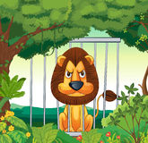 An angry lion inside a cage Stock Image