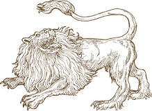 Angry lion roaring Stock Images