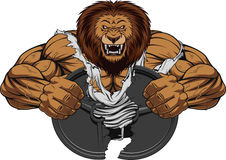 Angry lion strong. Vector illustration of a fierce strong lion bodybuilder breaks iron, over white background Stock Photos
