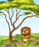 An angry lion beside a tree Stock Image