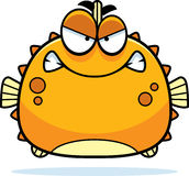 Angry Little Blowfish Royalty Free Stock Image