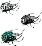 Angry little fly. An angry little fly, vector illustration. Black and white. Black, grey and white. Color stock illustration