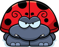 Angry Little Ladybug Stock Image