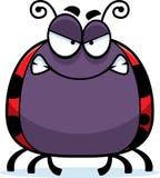 Angry Little Ladybug Royalty Free Stock Photography