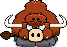 Angry Little Yak Royalty Free Stock Photos