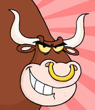 Angry Longhorn Head Stock Photo