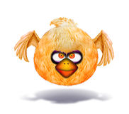 Angry looking orange bird Royalty Free Stock Photos