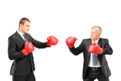 Angry mature boss and young businessman with red boxing gloves. Isolated on white background Stock Photos