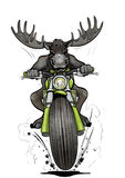 Moose-biker. Front view of angry moose or elk on a motorcycle Stock Photography