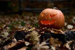 Angry orange pumpkin with scary smile among leaves at forest. Royalty Free Stock Photos