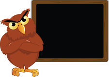 Angry owl and a blackboard Stock Photo