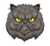 Angry Persian cat face Royalty Free Stock Images