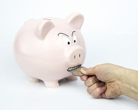 Angry Piggy Bank Stock Photo