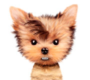 Angry puppy isolated on white. Funny angry puppy isolated on white. Realistic illustration of yorkshire terrier with clipping path vector illustration