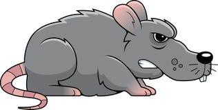 Angry Rat Stock Photos