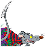 Angry rat Royalty Free Stock Images