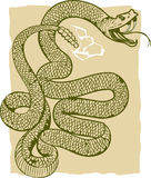 Angry Rattlesnake royalty free illustration