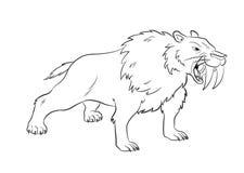 Angry Saber Tiger Drawing Vector Royalty Free Stock Image