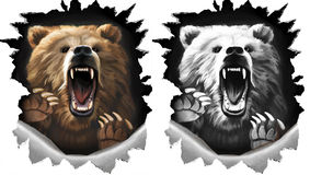 Angry shout bear on white background. Beast claws tearing metal. Two variations in color and monochrome black and white Royalty Free Stock Images
