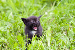Angry small kitten in the grass Stock Image