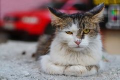 Angry stray cat royalty free stock photography