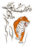 Angry tiger and Chinese plum tree. Royalty Free Stock Photography