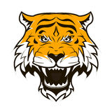 Angry Tiger Face. Roaring tiger head. Royalty Free Stock Photos