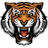 Angry tiger face. Vector of angry tiger head in detailed style royalty free illustration