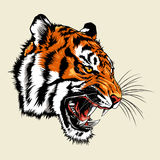 Angry tiger Head Mascot Stock Images