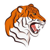 Angry tiger. Royalty Free Stock Image