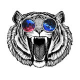 Angry tiger wearing hippie glasses Hipster animal Image for tattoo, logo, emblem, badge design Royalty Free Stock Image