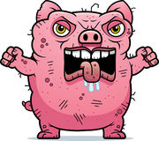 Angry Ugly Pig Stock Photos