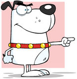 Angry White Dog Finger Pointing. Cartoon Character Stock Image