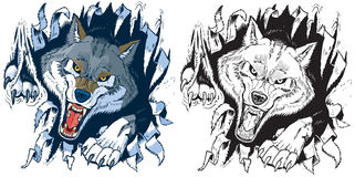 Angry Wolf Ripping out Background Vector Cartoon Royalty Free Stock Images